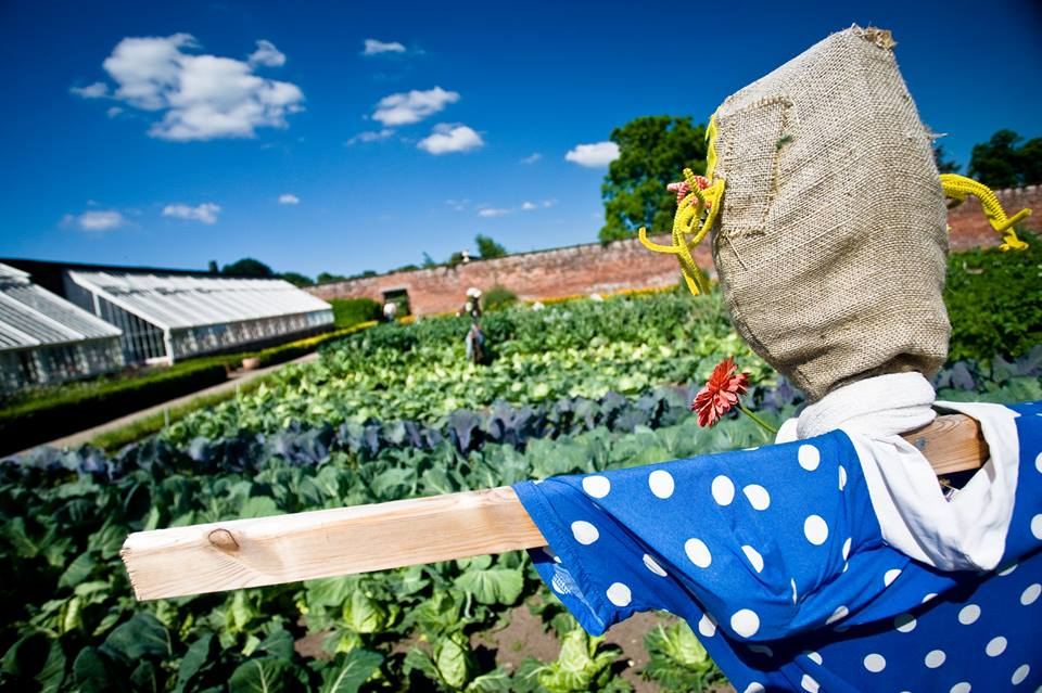 Scarecrows at tatton Park