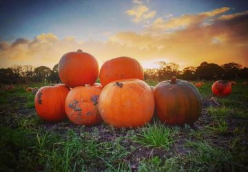 Pumpkins & ParentFolk as Halloween Family Social heads to the farm