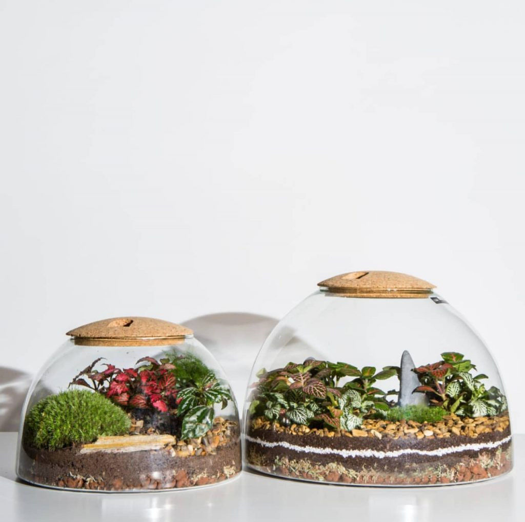 Mothers Day Terrarium Workshops LSA x Forest Gin 1